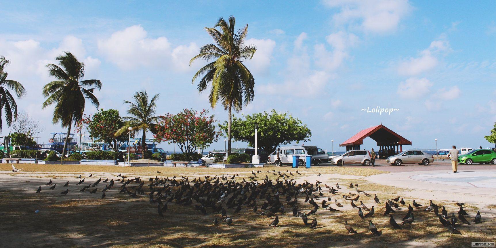 广场上超多鸽子啊