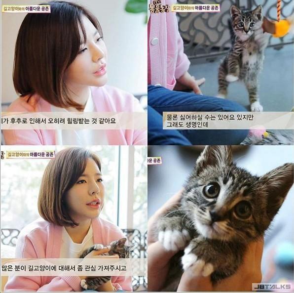 人美心更美! 少時Sunny照顧誤入陷阱受傷的流浪貓