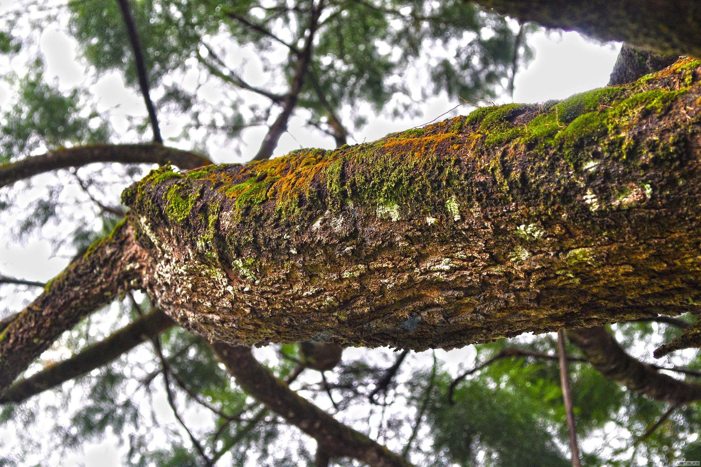 某树(前阵子才挖到的照片,自己都不知道是什么时候拍的)