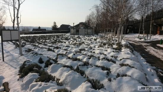 farm-tomita-lavender (1).jpg