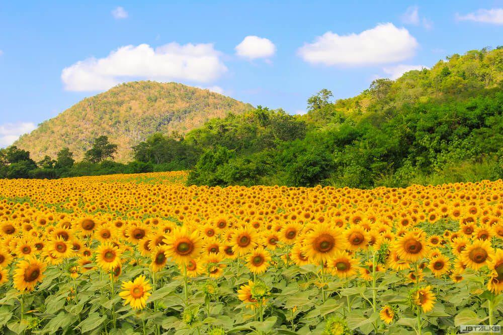 Khao-Yai-Thailand-2.jpg